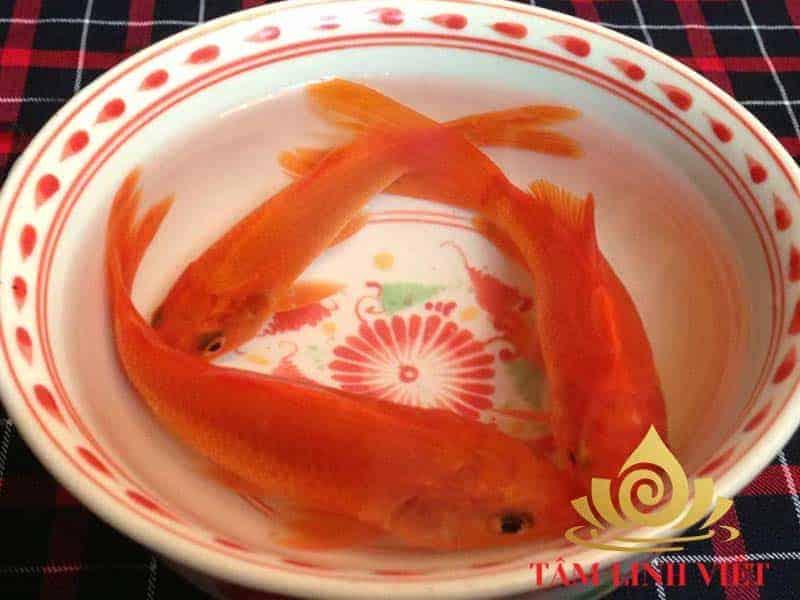Cá chép vàng dùng để tiễn ông Công ông Táo về thiên đình.