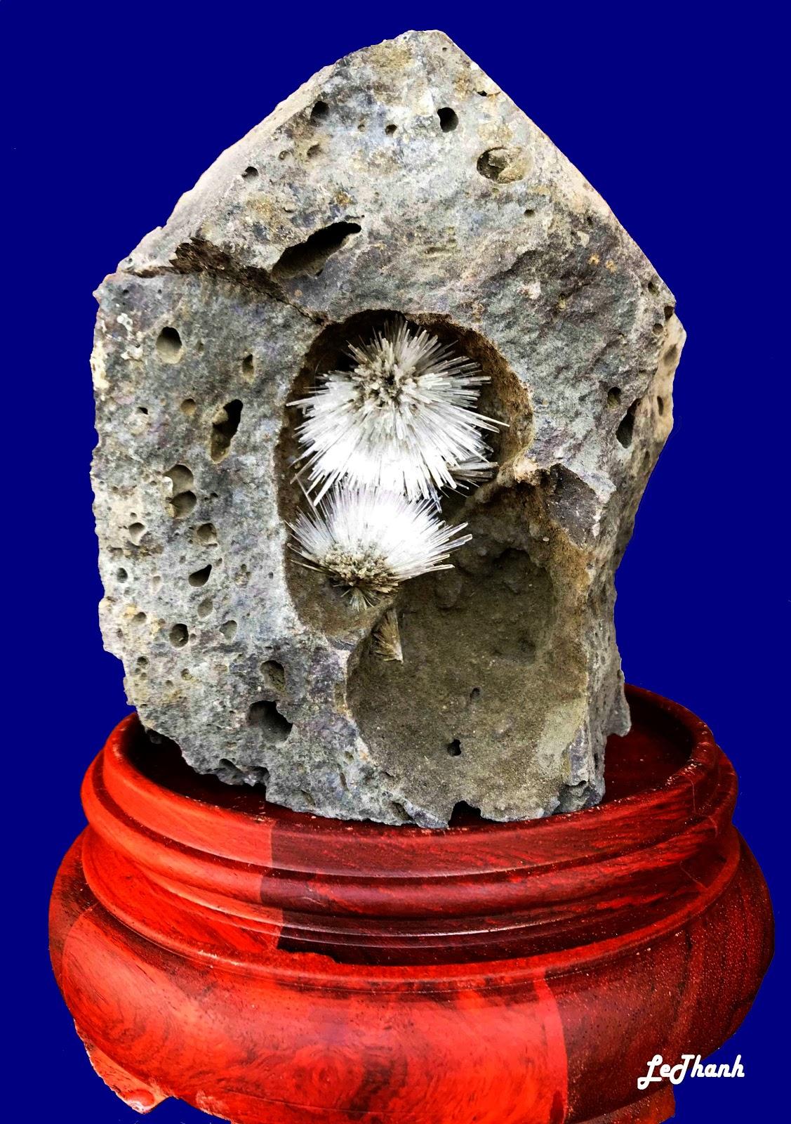 hình ảnh hoa ưu đàm đá