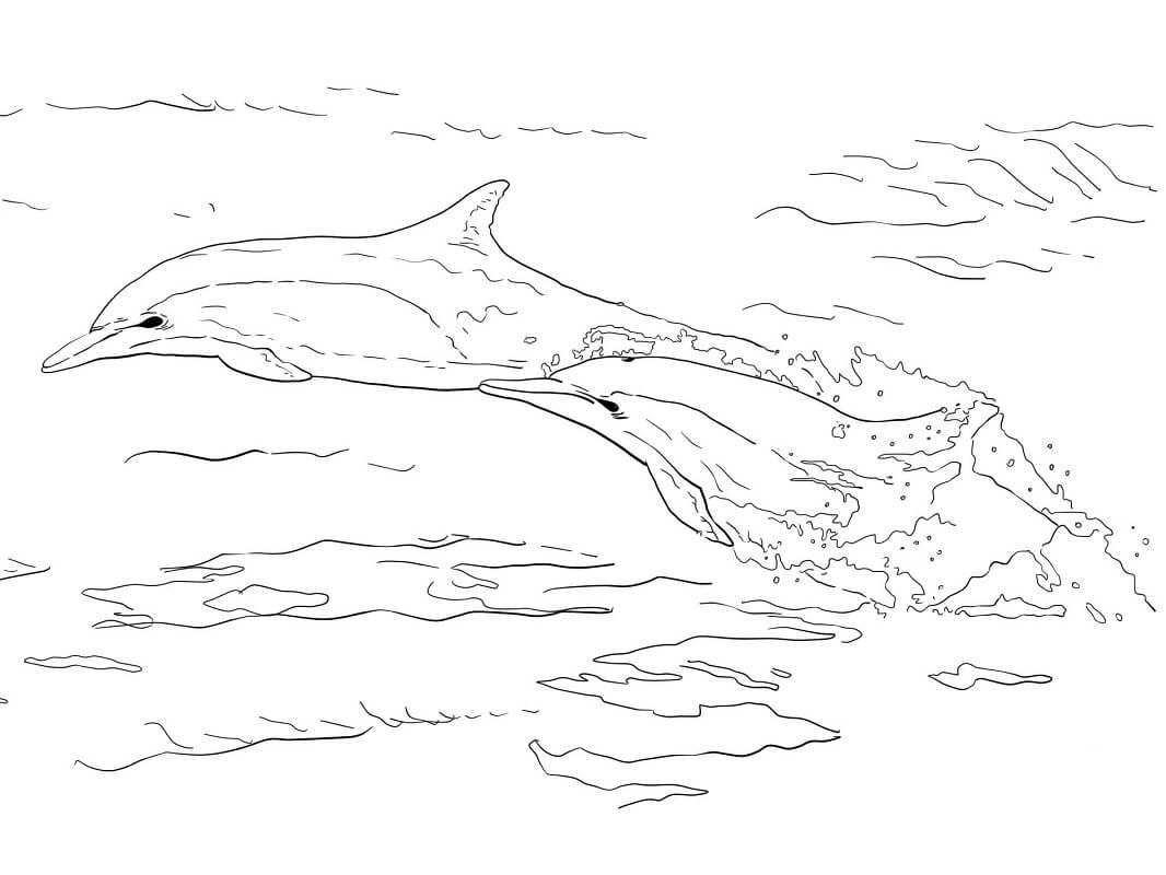 Tranh tô màu 2 Con Cá Heo Nhảy