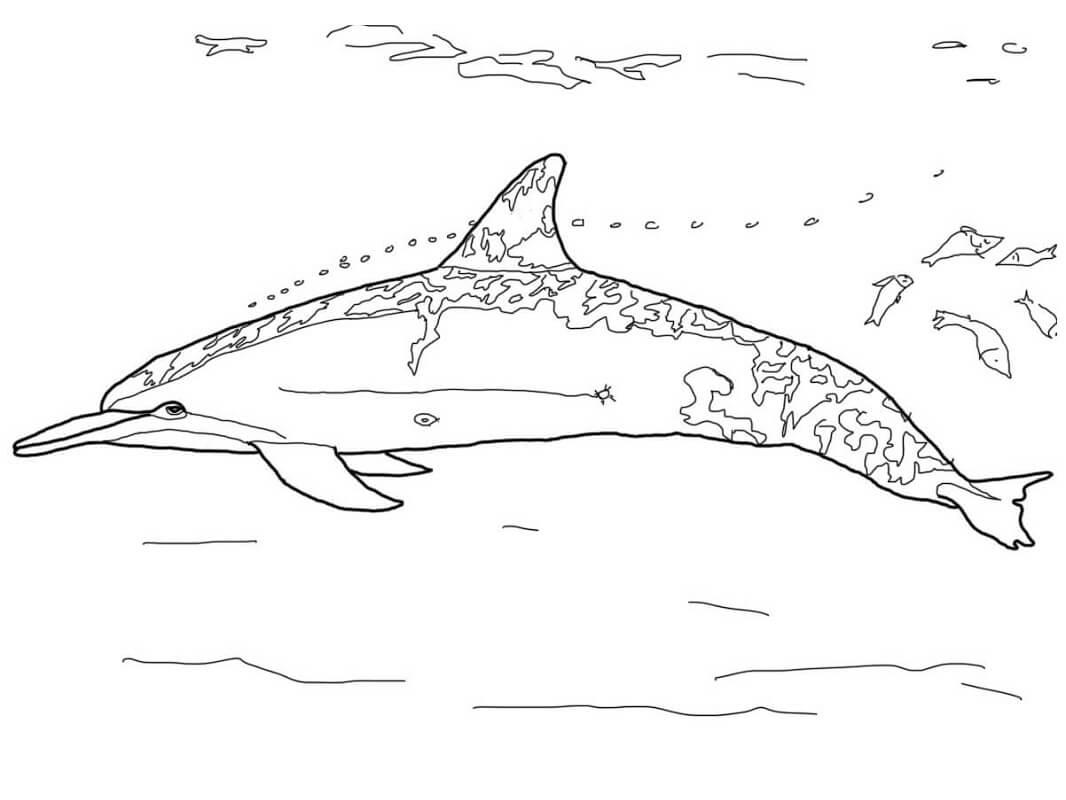 Tranh tô màu Con Cá Heo Bơi lượn