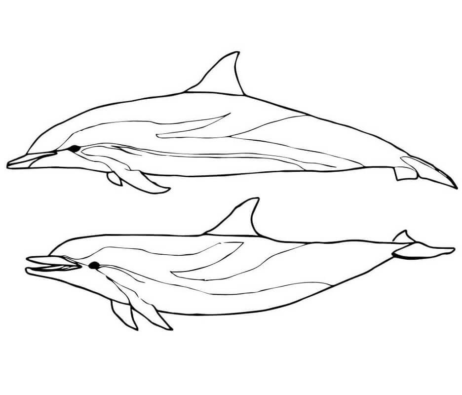 Tranh tô màu Con Cá Heo Bơi
