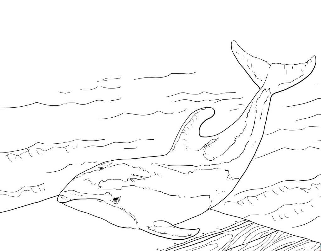 Tranh tô màu Con Cá Heo Mắc Cạn