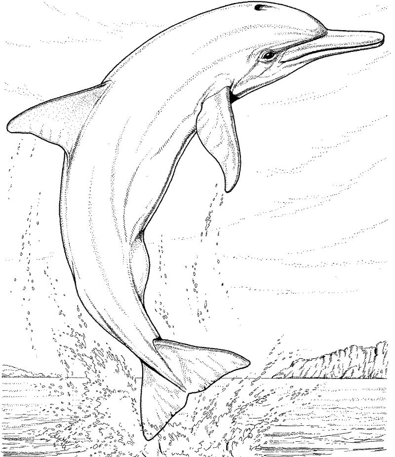 Tranh tô màu Con Cá Heo Nhảy