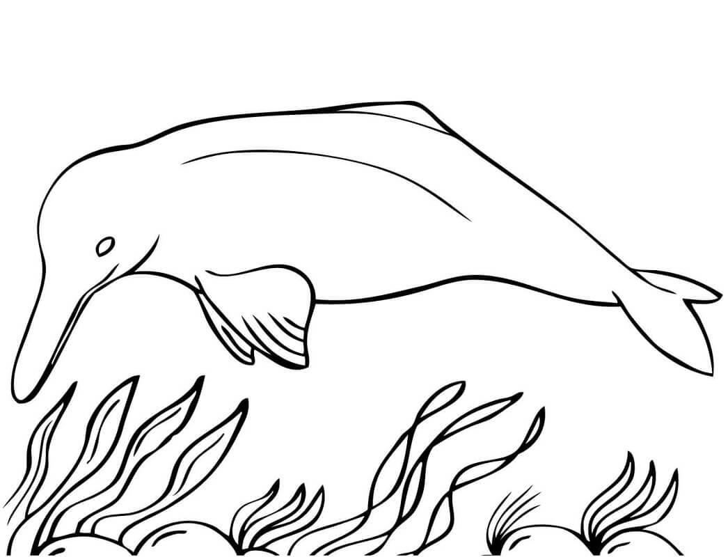 Tranh tô màu Con Cá Heo và Rong Biển