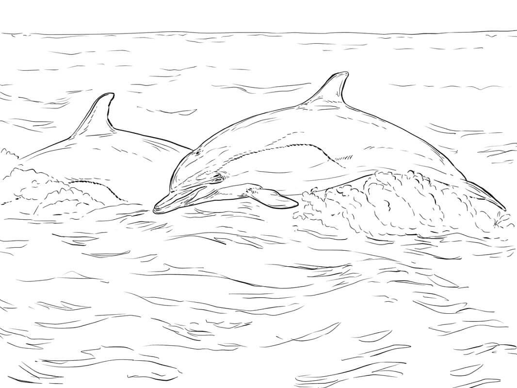 Tranh tô màu Những Con Cá Heo Dang Bơi