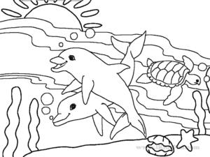cá heo bơi cùng rùa