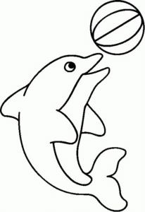 cá heo với quả bóng