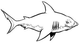 cá mập dáng sợ