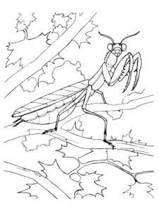 con bọ ngựa trên cành cây