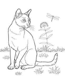 mèo bombay ở ngoài vườn