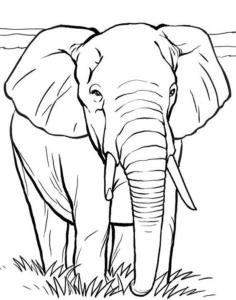 một con voi