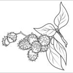 tranh to mau trai cay hoa qua cho be 052